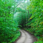 Backwoods-green-road