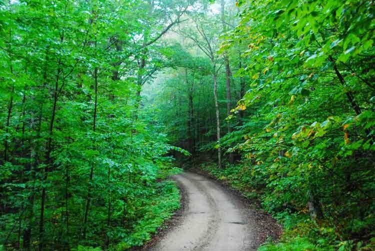 Backwoods-green-road