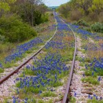Blue-bonnet-tracks