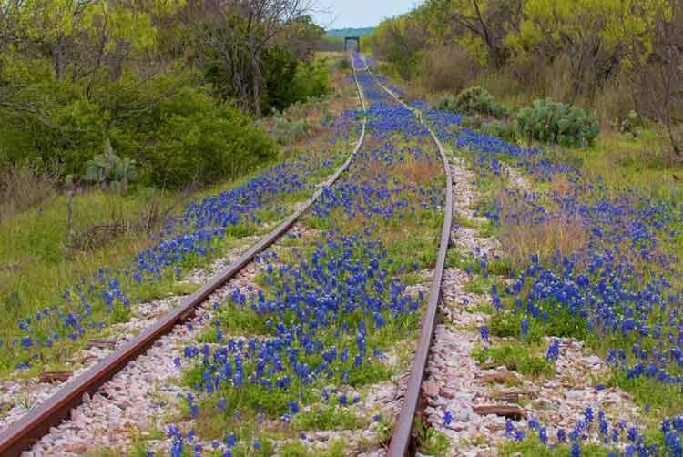 Blue-bonnet-tracks