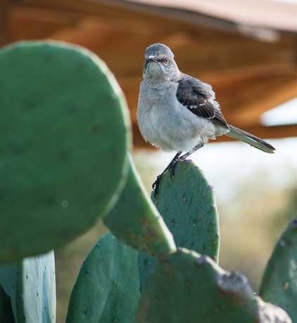 CactusBird3