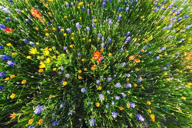Fish-eye-flowers