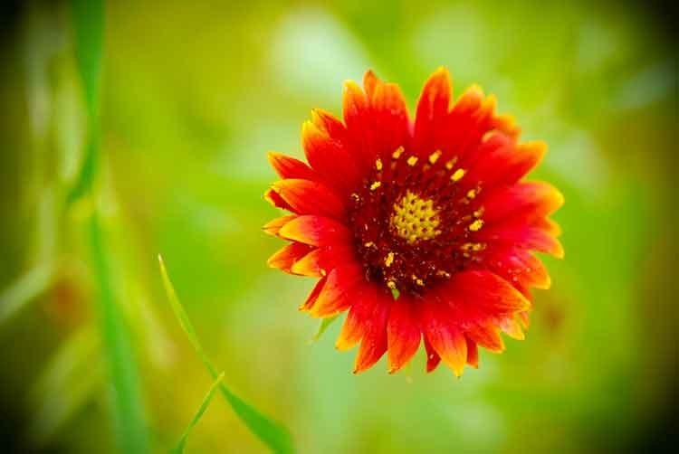 Floating-flower