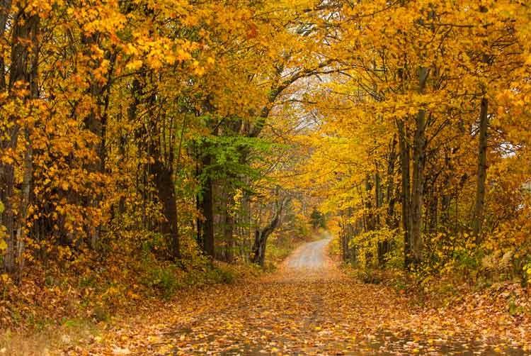 New-England-road