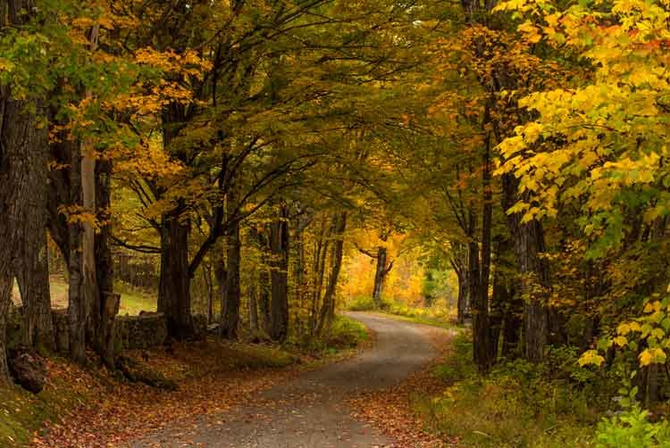Winding-country-road